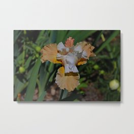 The Angel in My Arms- horizontal Metal Print