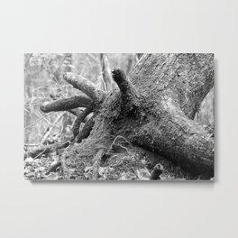 Resting Bull Metal Print