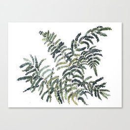 Woodland Fern Botanical Watercolor Illustration Painting Canvas Print