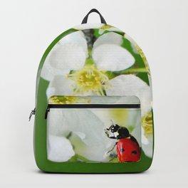 Ladybug spring 65 Backpack