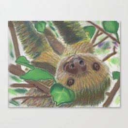 Suzie Sloth Canvas Print