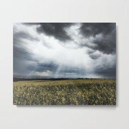Canola Field in Southern Alberta Metal Print