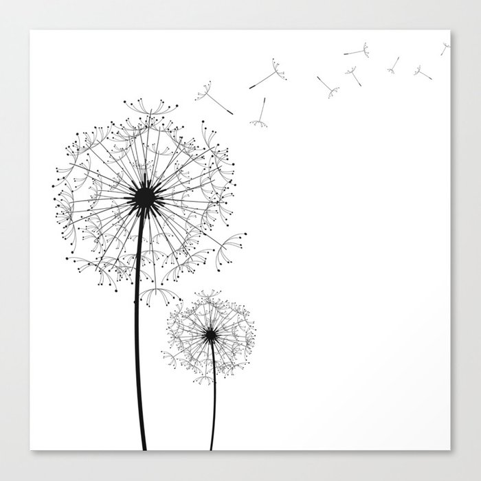 Black And White Dandelion Sketch Canvas Print By