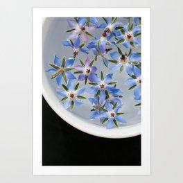 Borage Flowers Art Print