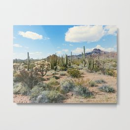Desert Plant Growth Metal Print
