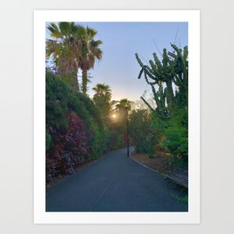 Evening Sunset Path Art Print