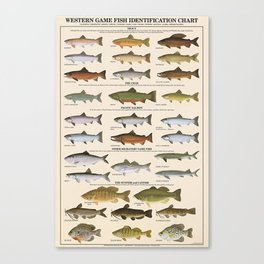 Illustrated Western Game Fish Identification Fishing - Sportsmen Chart Vintage Poster Canvas Print