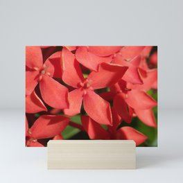 Living Coral Flowers Close Up Mini Art Print