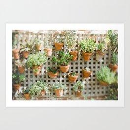 Wall of Succulent Plants Art Print