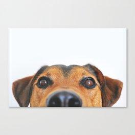 Aloof Woof Canvas Print