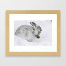 The winter survivor Framed Art Print