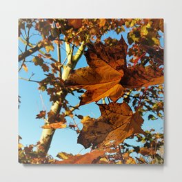 Autumn in Bold Metal Print