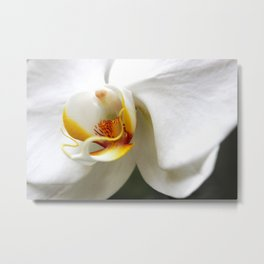 Orchid Color Burst Metal Print