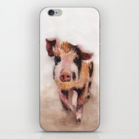 pig iPhone & iPod Skins featuring Pig by Bridget Davidson