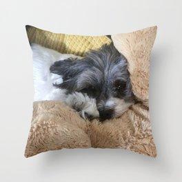 Shih Tzu Coton De Tuléar Dog Among Stuffed Animals Throw Pillow