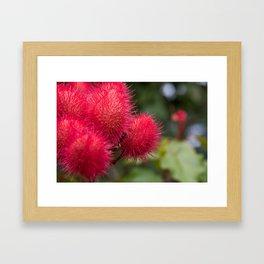 Maui flora I Framed Art Print