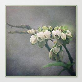 Blueberry Blossoms Canvas Print