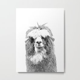 Black and White Alpaca Metal Print