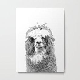Black and White Alpaca Metal Print