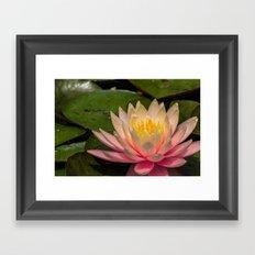 Flower Series 3 Framed Art Print