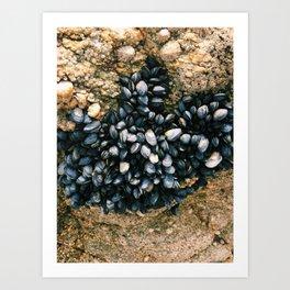 le pouliguen mussels on rock photograph Art Print