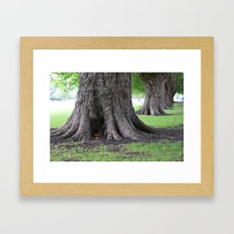 Cambridge tree 4 Framed Art Print