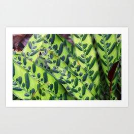Rattlesnake Plant Art Print