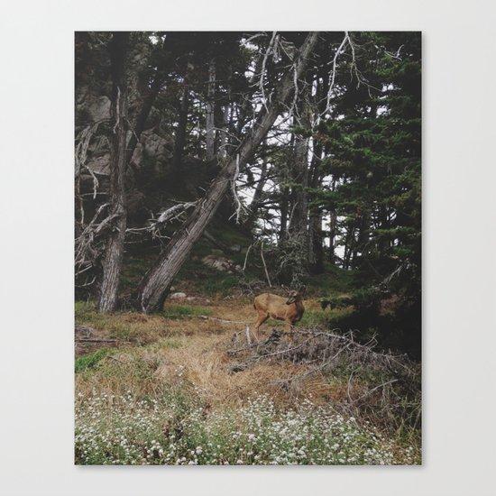 Lobos Deer Canvas Print