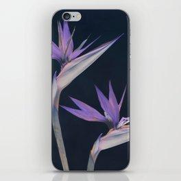Birds of paradise iPhone Skin