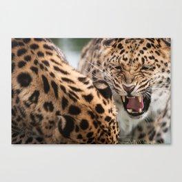 Amur Leopards Canvas Print