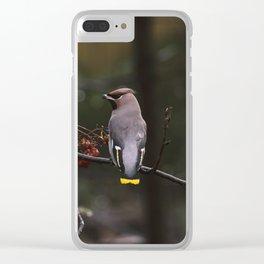 Bohemian waxwing on rowan tree branch Clear iPhone Case