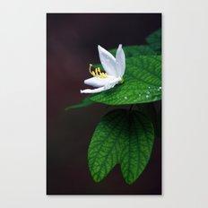 drop that flower Canvas Print