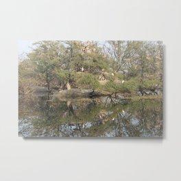 Keoladeo Reflections Metal Print