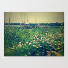 light filters through Canvas Print