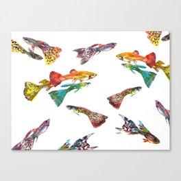 Tropical Colors, Guppy Aquarium Fish , Aquarium Art Underwater Canvas Print
