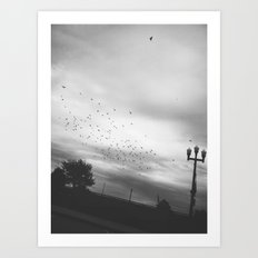 Birds In Flight Art Print