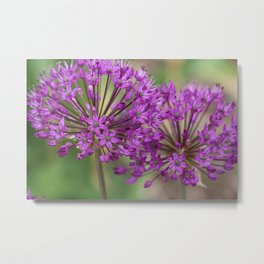 Purple Allium Twins Metal Print