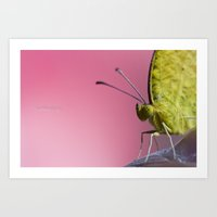 insect Art Prints featuring Insect by TJAguilar Photos