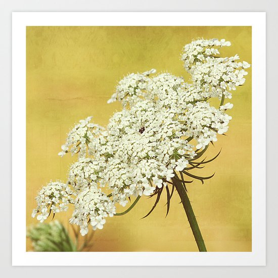 Queen Anne's Lace Flower Head on Yellow Art Print