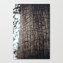 The Work of A Woodpecker Canvas Print