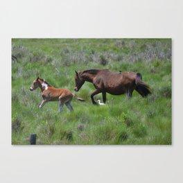 Chincoteague Ponies Canvas Print