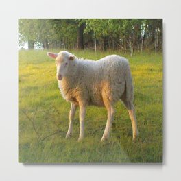 Little lamb Metal Print