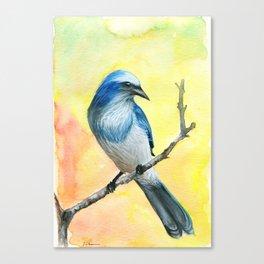 Scrub Jay Canvas Print