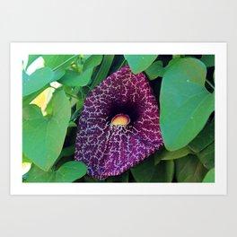 Calico Flower Art Print