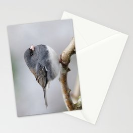 Fluffy Cassiar Dark-Eyed Junco on the Pear Tree Stationery Cards