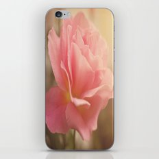 Love is much like a wild rose....... iPhone & iPod Skin
