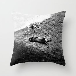 Dead Lions (or sleeping?) NC Zoo by: Nathan Wellman Throw Pillow