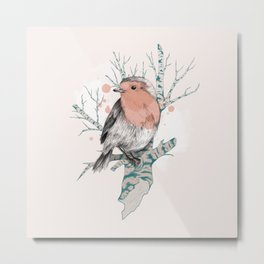 Robin on Birch Metal Print