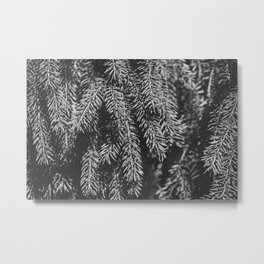 Branches of spruce full frame nature background. Metal Print