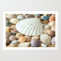Sea Shells  -  Ocean, Sea, Nature Art Print